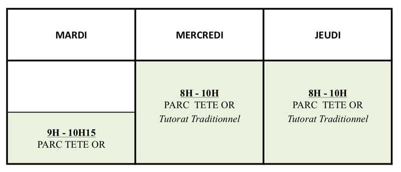 cours-tai-chi-parc-tete-or-lyon-chen-debutants-2020-2021