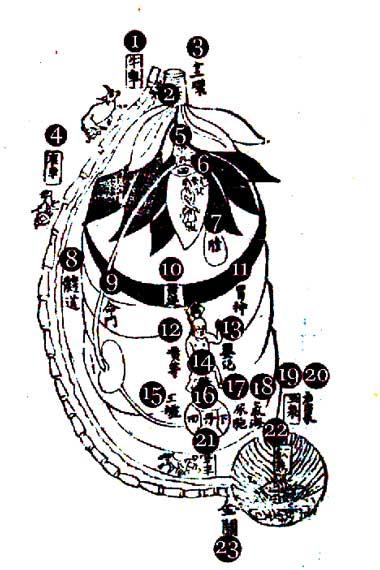 Champ-Cinabre-Energie-Dantian-Taoiste-Corps-interieur